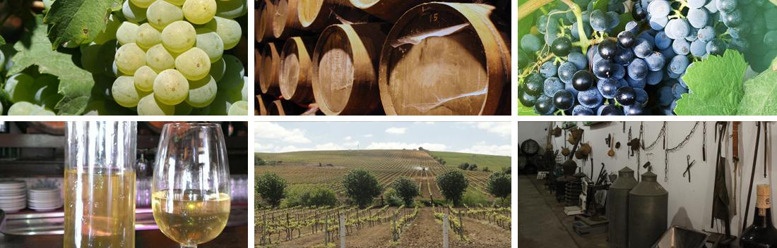 cabecera-vinos-y-brandy-01